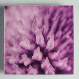 Cuadro-Acrilico-Flor-Violeta-25x25