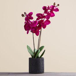 Orquidea-Violeta-23in-en-Maceta-LFO743-VI-TT