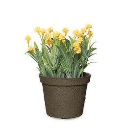Orquidea-Amarilla-h9cm
