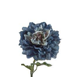 Peonia-Single-Azul-Grisacea-