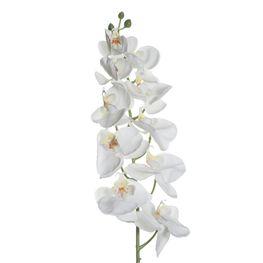 Orquidea-Blanca-MO25669