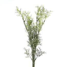 Helecho-Bush-Verde